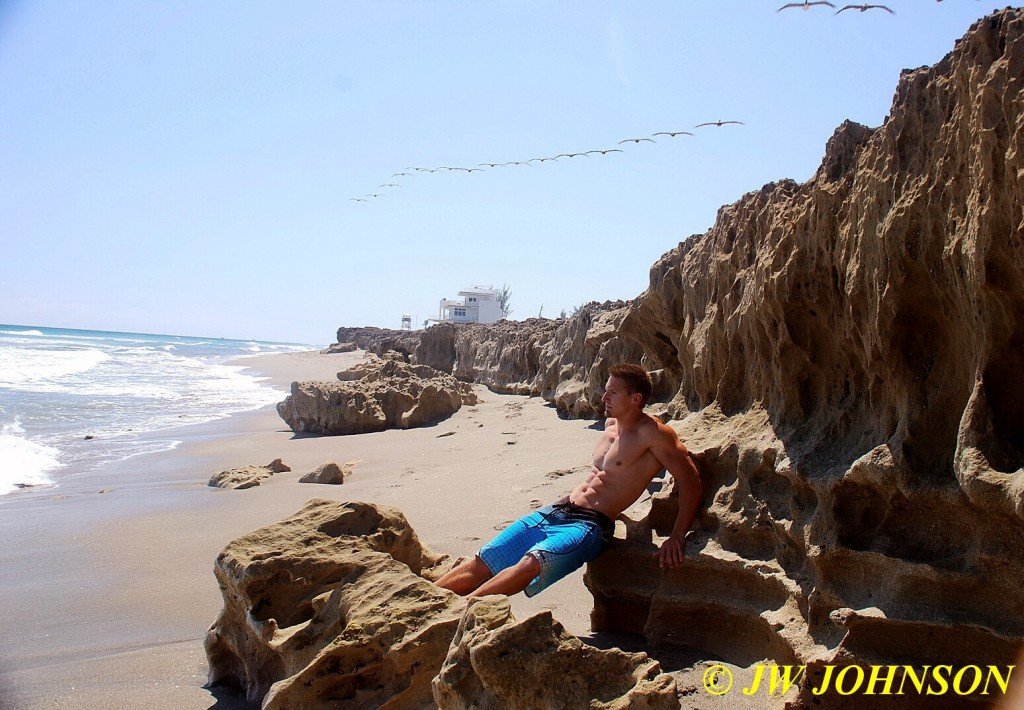 Birds of Flight Beach Boy 2