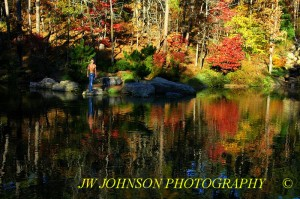 Garvan woodland pond WM