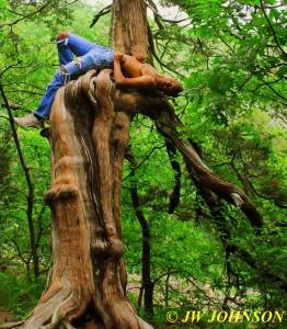 Rim Rock Trail Tree