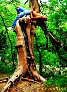 Rim Rock Trail Tree Art 2