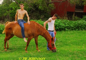 65 Horse Hotties