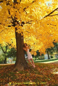 Under the Old Maple Tree