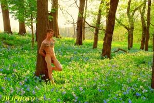Bluebells Field of Dreams